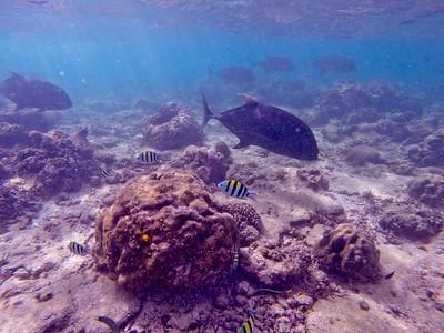 Dive in El Nido Series 2 Photograph 19