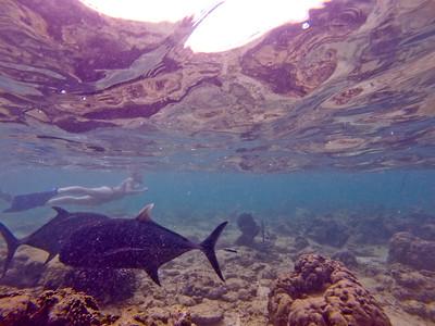 Dive in El Nido Series 2 Photograph 4