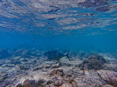 Dive in El Nido Series 2 Photograph 1