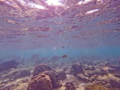 Dive in El Nido Series 2 Photograph 14