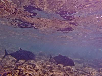 Dive in El Nido Series 2 Photograph 2
