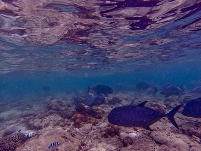 Dive in El Nido Series 2 Photograph 12