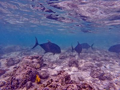 Dive in El Nido Series 2 Photograph 17