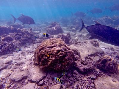 Dive in El Nido Series 2 Photograph 20
