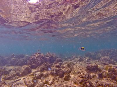 Dive in El Nido Series 2 Photograph 22