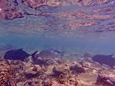 Dive in El Nido Series 2 Photograph 16