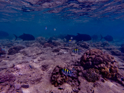 Dive in El Nido Series 2 Photograph 11