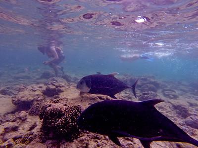 Dive in El Nido Series 2 Photograph 5