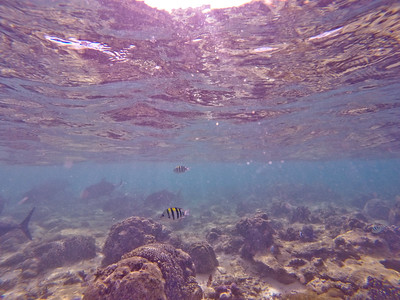 Dive in El Nido Series 2 Photograph 15