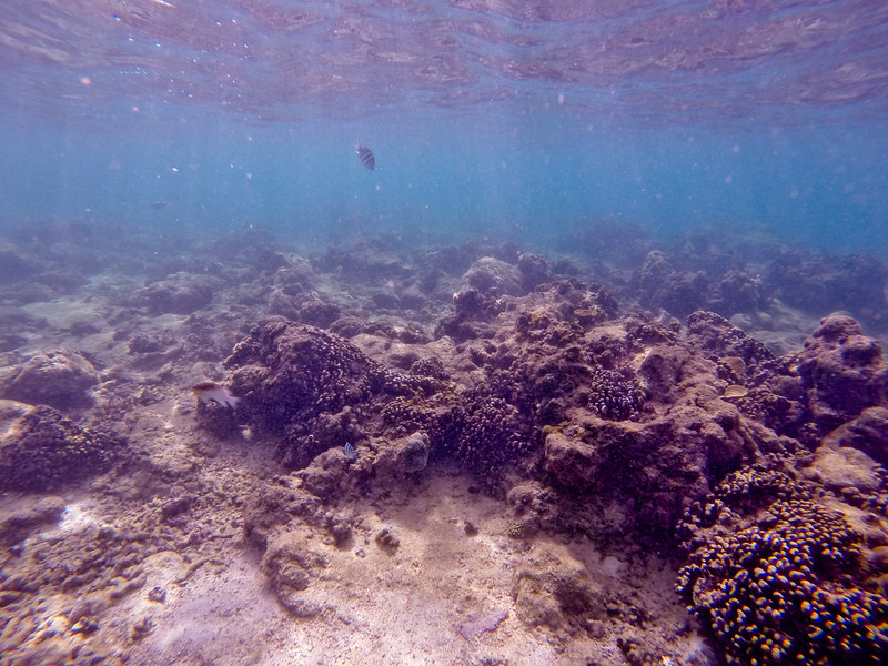 Dive in El Nido Series 2 Photograph 25