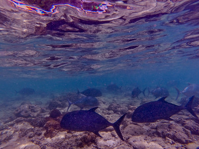 Dive in El Nido Series 2 Photograph 13