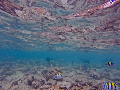 Dive in El Nido Series 2 Photograph 8