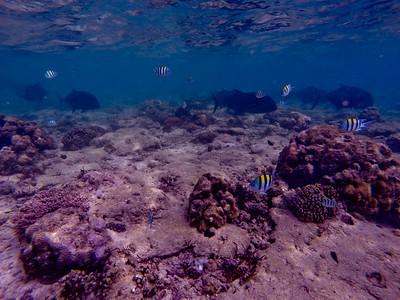 Dive in El Nido Series 2 Photograph 10
