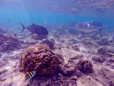 Dive in El Nido Series 2 Photograph 21