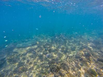 Dive in El Nido Series 3 Photograph 6