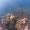 Dive in El Nido Series 3 Photograph 28