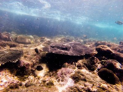 Dive in El Nido Series 3 Photograph 4