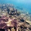 Dive in El Nido Series 3 Photograph 10
