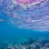 Dive in El Nido Series 3 Photograph 3