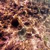 Dive in El Nido Series 3 Photograph 5