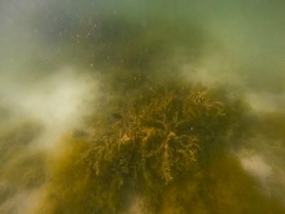 Dive in El Nido Series 3 Photograph 24