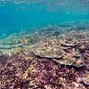 Dive in El Nido Series 4 Photograph 30
