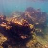 Dive in El Nido Series 4 Photograph 26