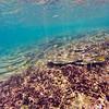Dive in El Nido Series 4 Photograph 29