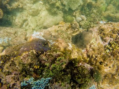 Dive in El Nido Series 4 Photograph 21