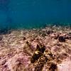 Dive in El Nido Series 4 Photograph 31