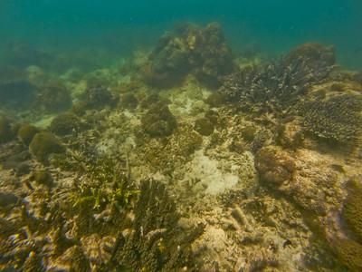 Dive in El Nido Series 4 Photograph 17