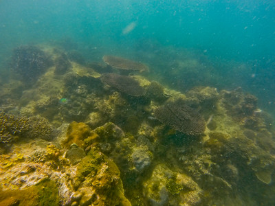 Dive in El Nido Series 4 Photograph 19