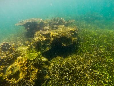 Dive in El Nido Series 4 Photograph 3