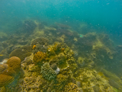 Dive in El Nido Series 4 Photograph 18