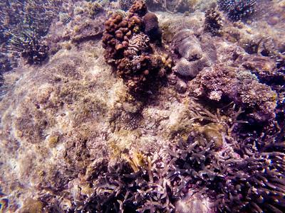 Dive in El Nido Series 4 Photograph 5