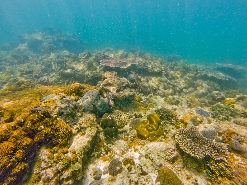 Dive in El Nido Series 4 Photograph 13