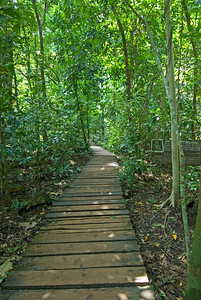 Wooden path leading to the Underground River - Palawan, Philippines