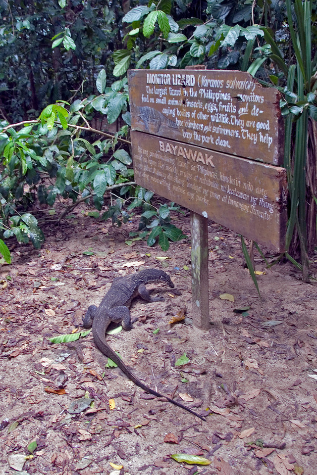 Sign about monitor lizard at the Underground River Park - Palawan, Philippines