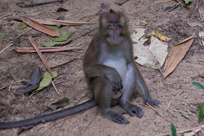 Monkey sitting on the ground near Underground River - Palawan, Philippines