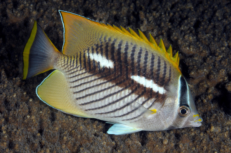 Fish_091213b2