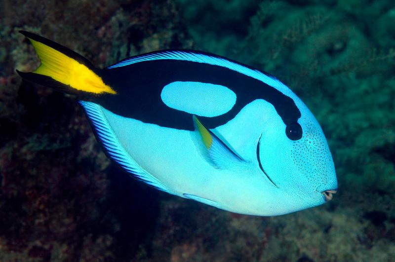 Fish_091210a