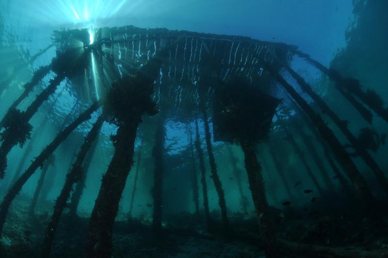 Under the Dock, at Airborek