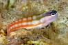 Fish_091217b