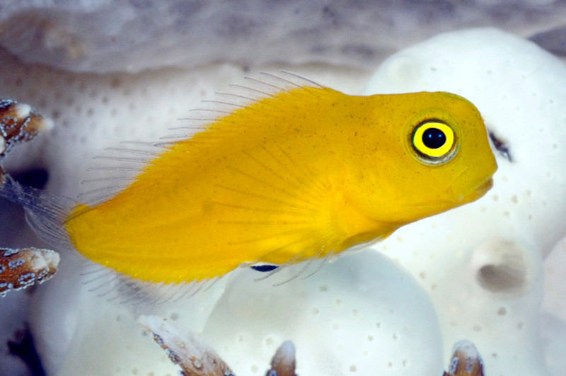 Fish_091212j
