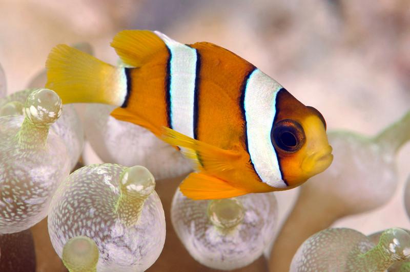 Fish_091216