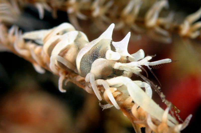 Shrimp_091212