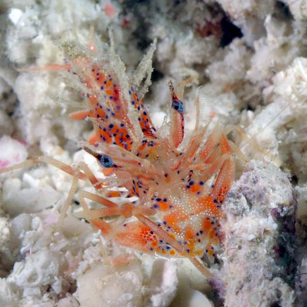Shrimp_091212l
