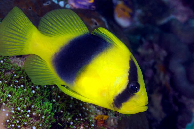 Fish_091210