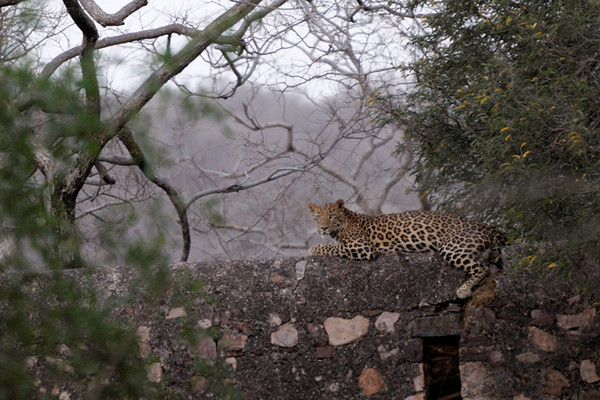 This leopard was in the fort that surrounds the park.