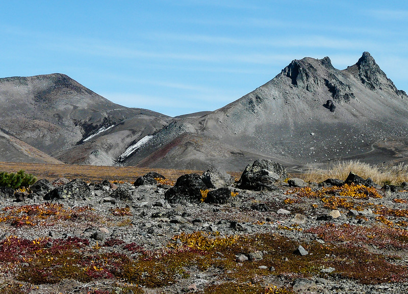 Gold groundcover on the tundra in front of gray, barren mountains.